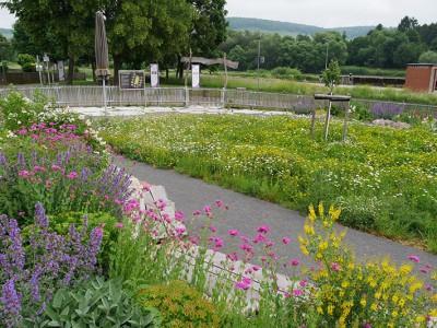 Blumenwiese mit Wildblumen Naturschaugarten in Main Spessart